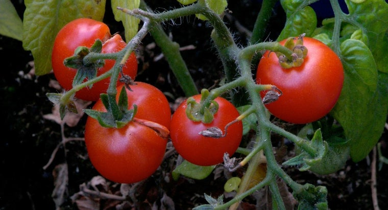 What Is an Organic Tomato Fertilizer?