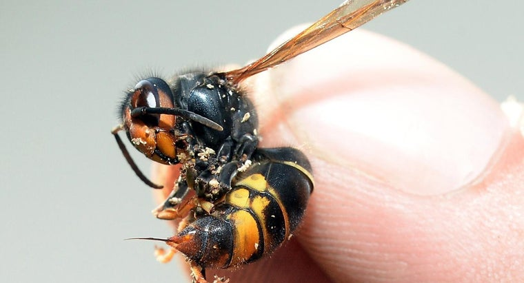 What Over-the-Counter Drugs Should I Take If I Get Stung by a Wasp?