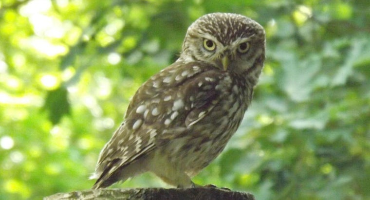 What Does the Owl Symbolize for Egyptians?