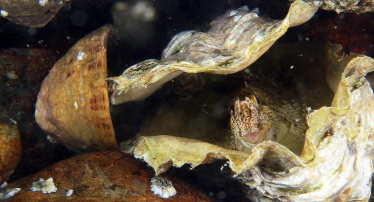 How Do Oysters Move?