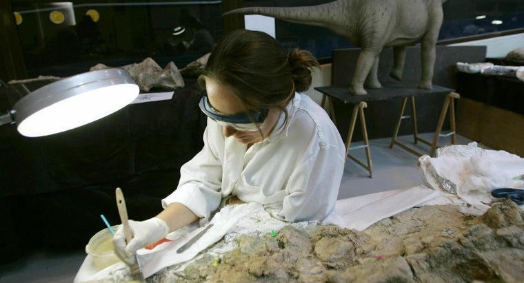 What Are Some Palaeontology Jobs?