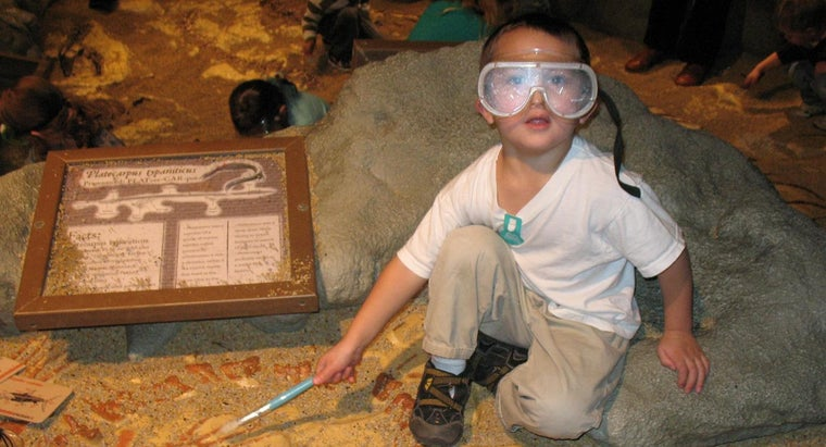 What Does a Paleontologist Do?
