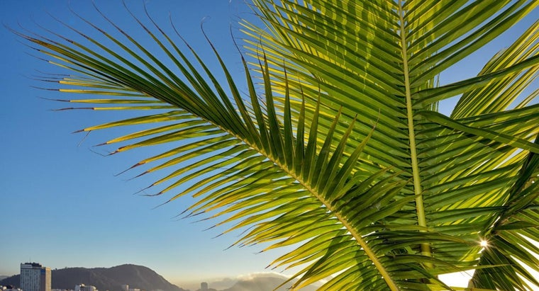 What Are Some Palm Frond Crafts?