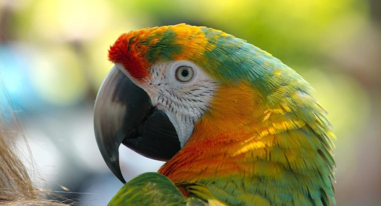 What Are the Parrot's Predators?