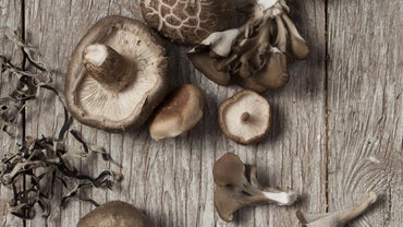 What Are The Parts Of A Mushroom