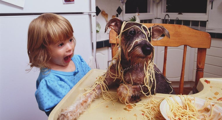 Is Pasta Good for Dogs?