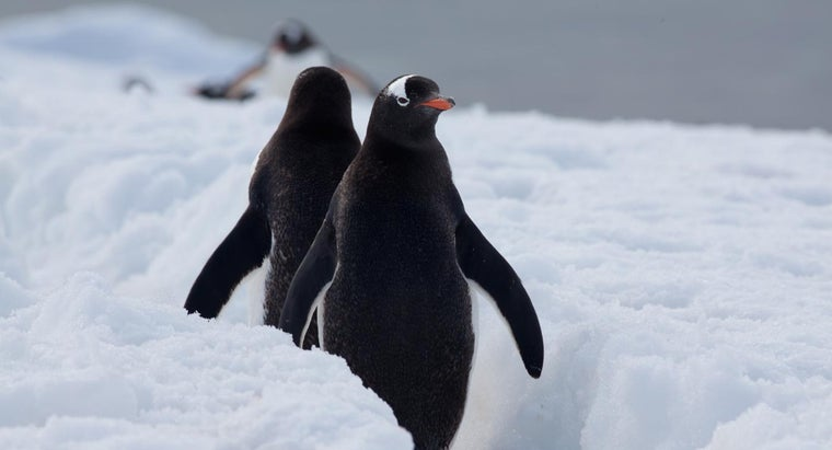 Where Do Penguins Live in the Wild?