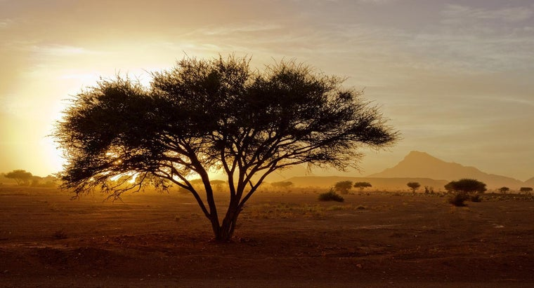 What Percentage of Africa Is Desert?