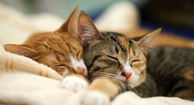 What Percentage of Their Day Do Cats Spend Sleeping?