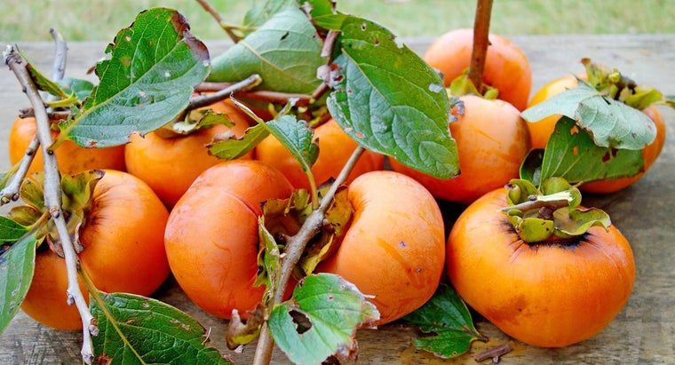 What Persimmon Tree Facts Do You Know?