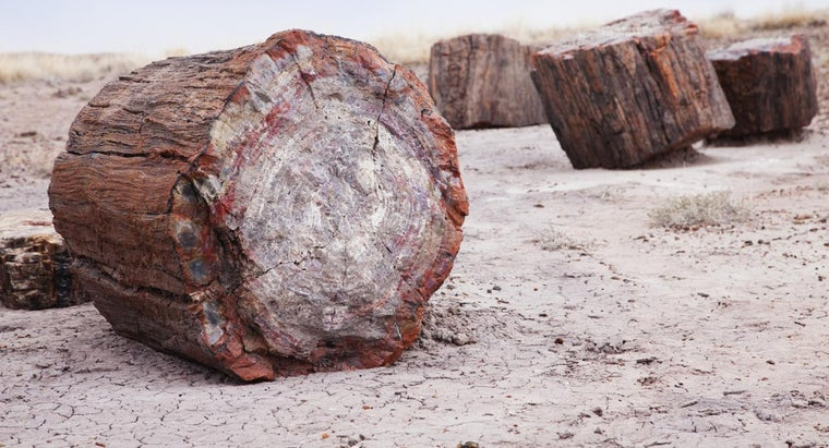 How Is Petrified Wood Formed?