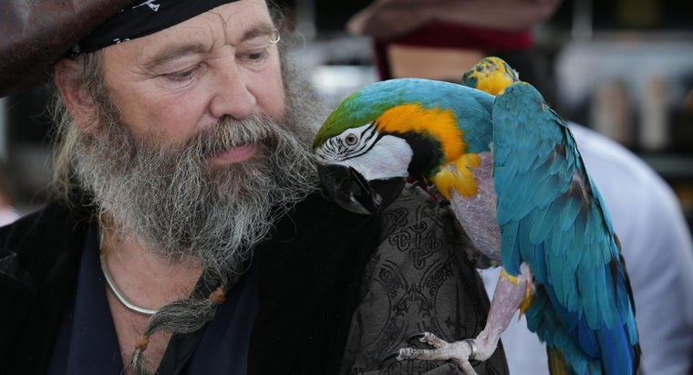 Why Do Pirates Have Parrots?