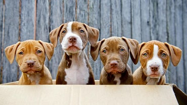 What Are Some Facts About the Pit Bull Breed?