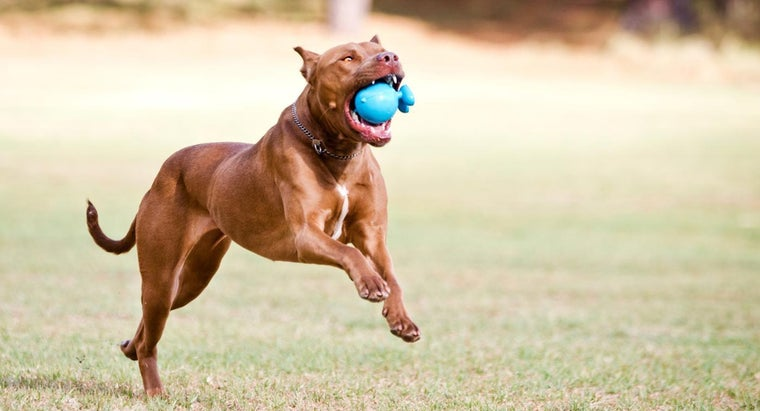 What Are the Best Pitbull Kennels?