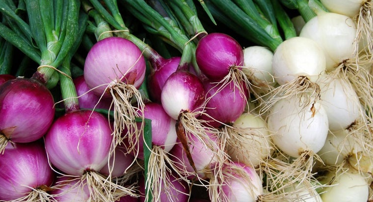 How Do You Plant Old Onions?