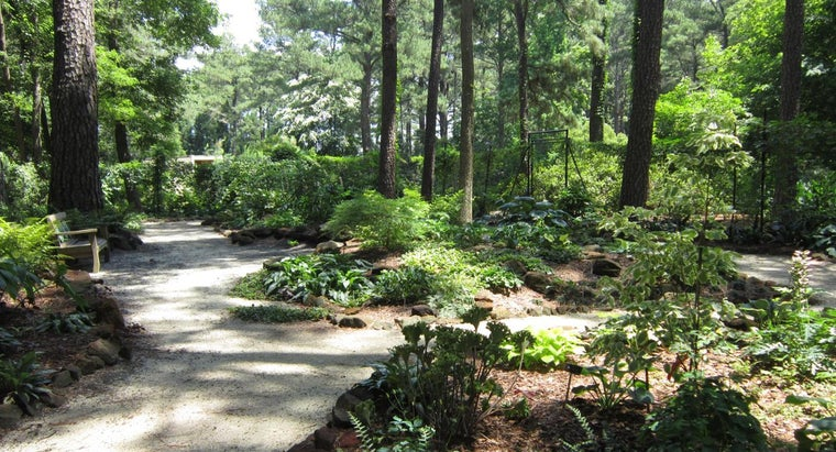 What Plants Grow Best in the Shade?