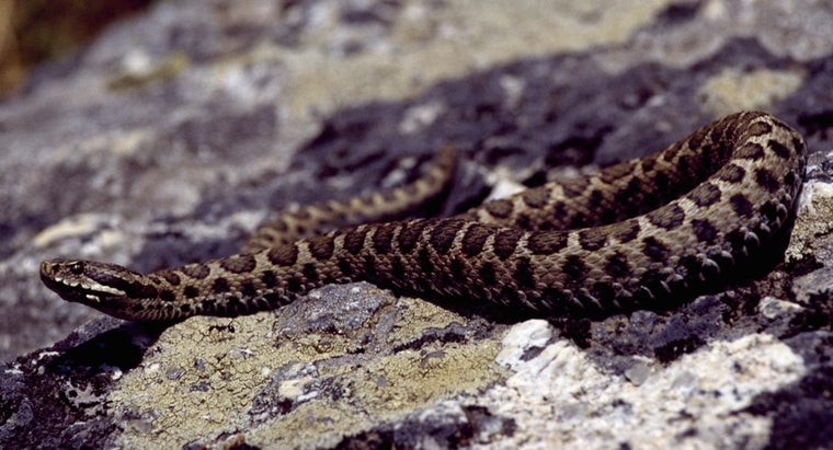 Are There Poisonous Snakes in Italy?
