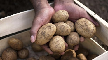 How Do You Know If a Potato Has Gone Bad?