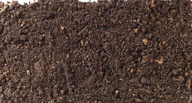 What Causes Potting Soil To Grow Mold