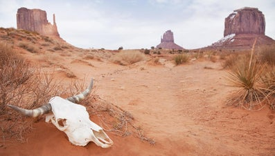 What Are the Primary Consumers of the Southwest American Desert?