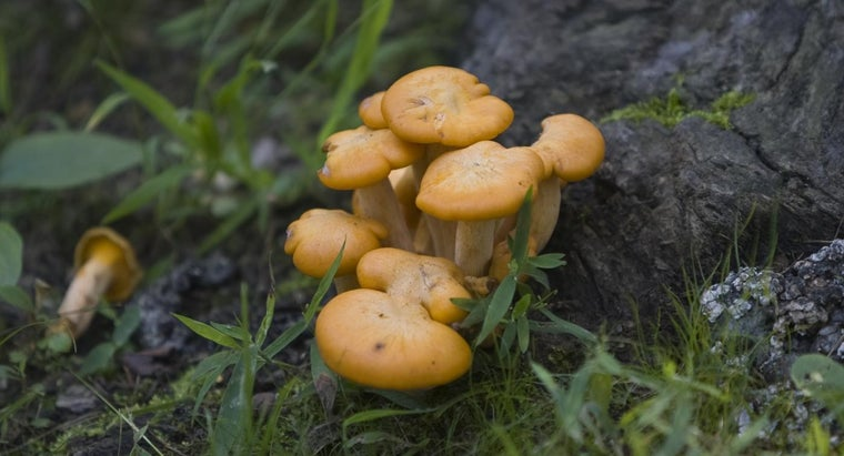 What Is the Primary Difference Between Fungi and Plants?