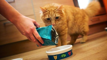 What Are Printable Purina Cat Food Coupons?