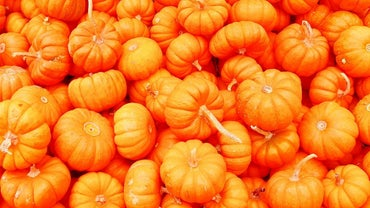 Where Do Pumpkins Grow?