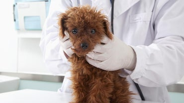 When Do Puppies Get Their First Shots?