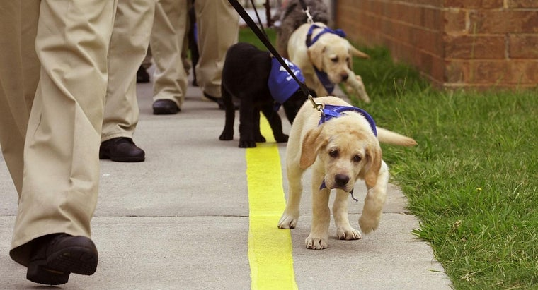 What Are Some Puppy Obedience Training Tips?