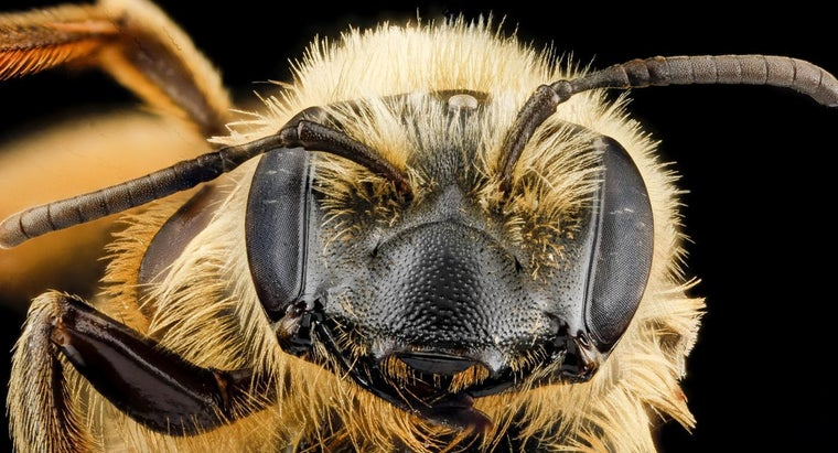 What Is the Purpose of Compound Eyes?