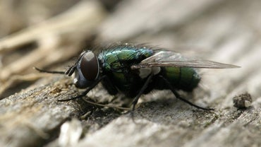 What Is the Purpose of a Fly?