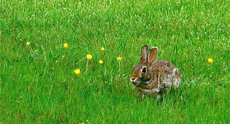 What Is a Rabbit's Home Called?