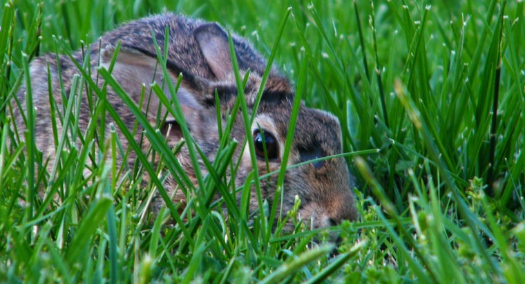 Why Do Rabbits Dig Holes in Lawns and Gardens?