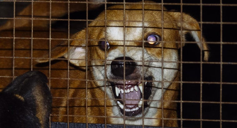 What Are Some Rabies Symptoms in Dogs?