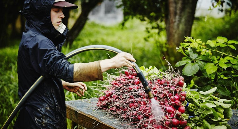 Where Do Radish Seeds Come From?