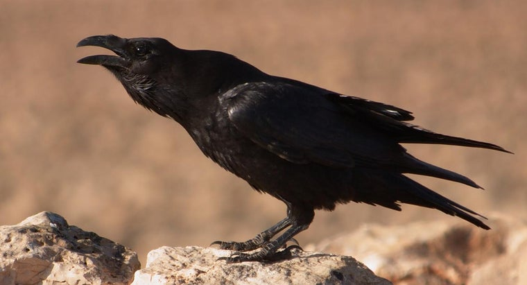 What Does The Raven Symbolize Reference