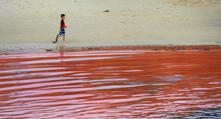 How Does Red Algae Move?
