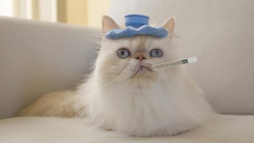 How Do You Reduce a Cat's Fever?