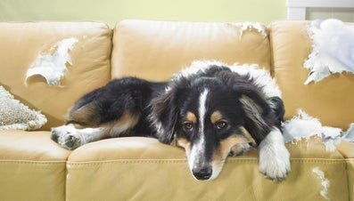 What Are Some Remedies to Keep Dogs Off Furniture?