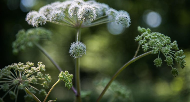 How Do You Remove Hogweed From Your Garden?