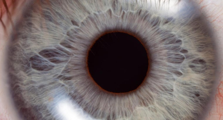 Where Is the Retina's Blind Spot?