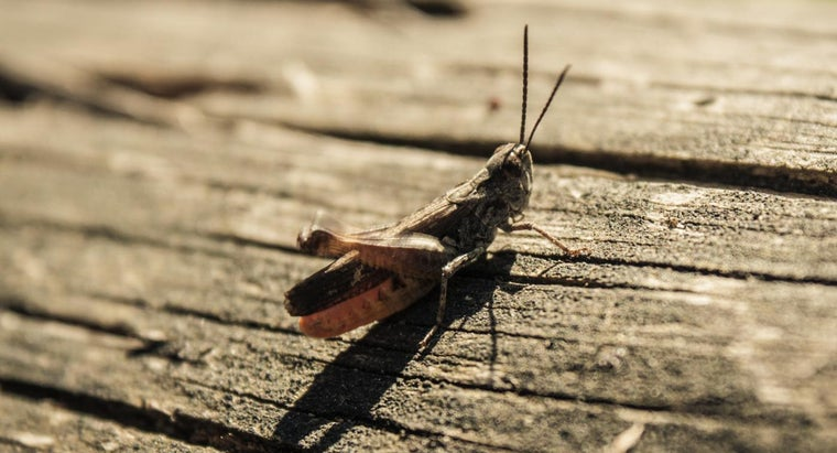 How Do You Get Rid of Crickets?