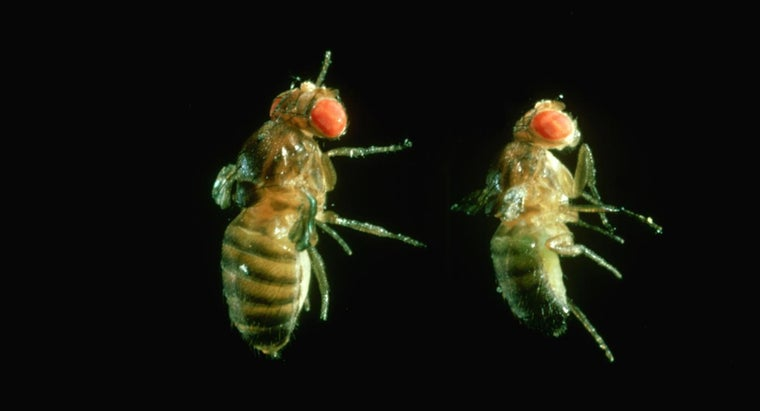 How Do You Get Rid of Fruit Flies on Plants?