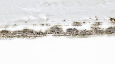 How Do You Get Rid of Mold Growing on the Bathroom Wall Before Painting?