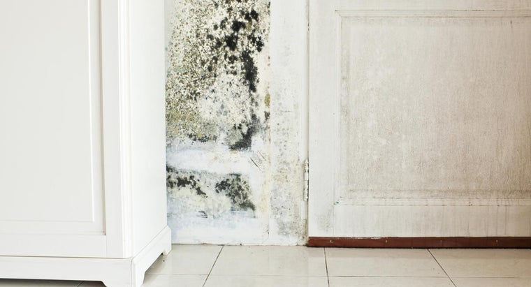How Do You Get Rid of Mold in a House?