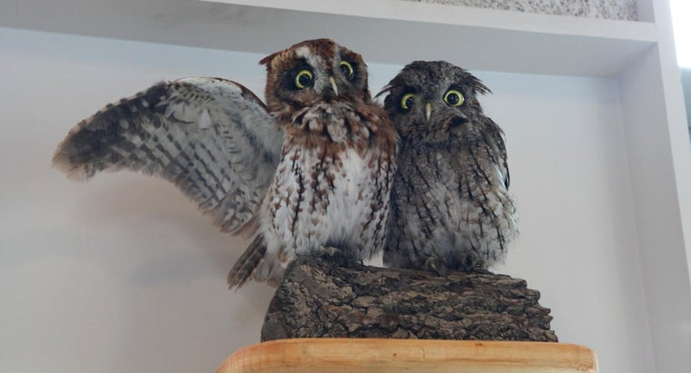 How Do You Get Rid of Owls?