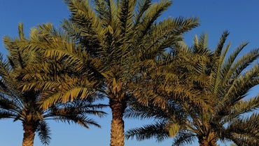 How Do You Get Rid of Palm Trees?