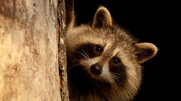 How Do You Get Rid of Raccoon Eyes?