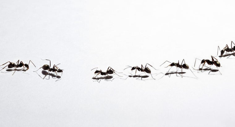How Do You Get Rid of Small Ants?