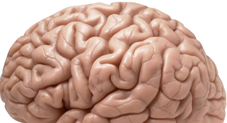 Is the Right Side of the Brain the Most Important Side?